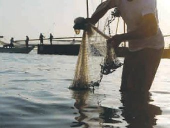 13% of the world's wild-caught fish comes from the Indian Ocean. The UAE promotes the development of sustainable fisheries where fish processing for re-export has begun to grow in recent years.