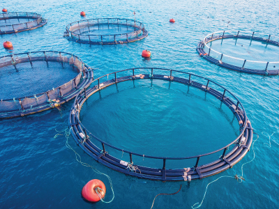 Aquaculture market expected to witness CAGR of 7.7% between 2019 & '27